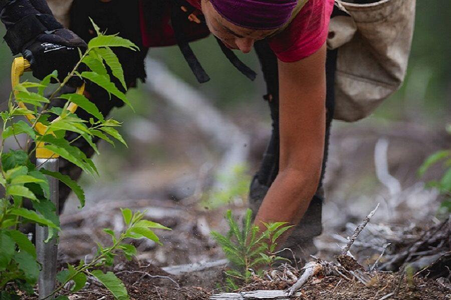 ¡Nosotros plantamos árboles!